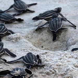 sea-turtles_kathryn-brooks
