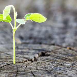 The concept of business growth The use of the regeneration of trees.