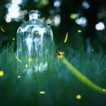fireflies.jpg.838x0_q80